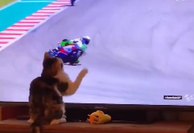 Katze mit magischen Fähigkeiten