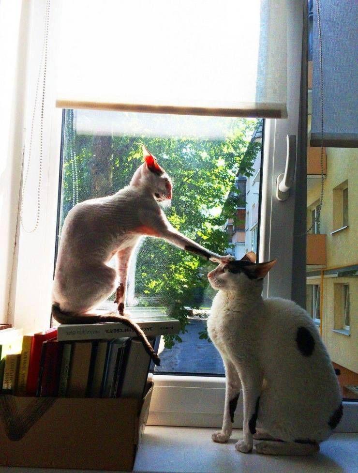 SpassPrediger.com - Picdump #108 - Lustige Bilder und coole Funpics - lustige Picdumps vom Spassprediger