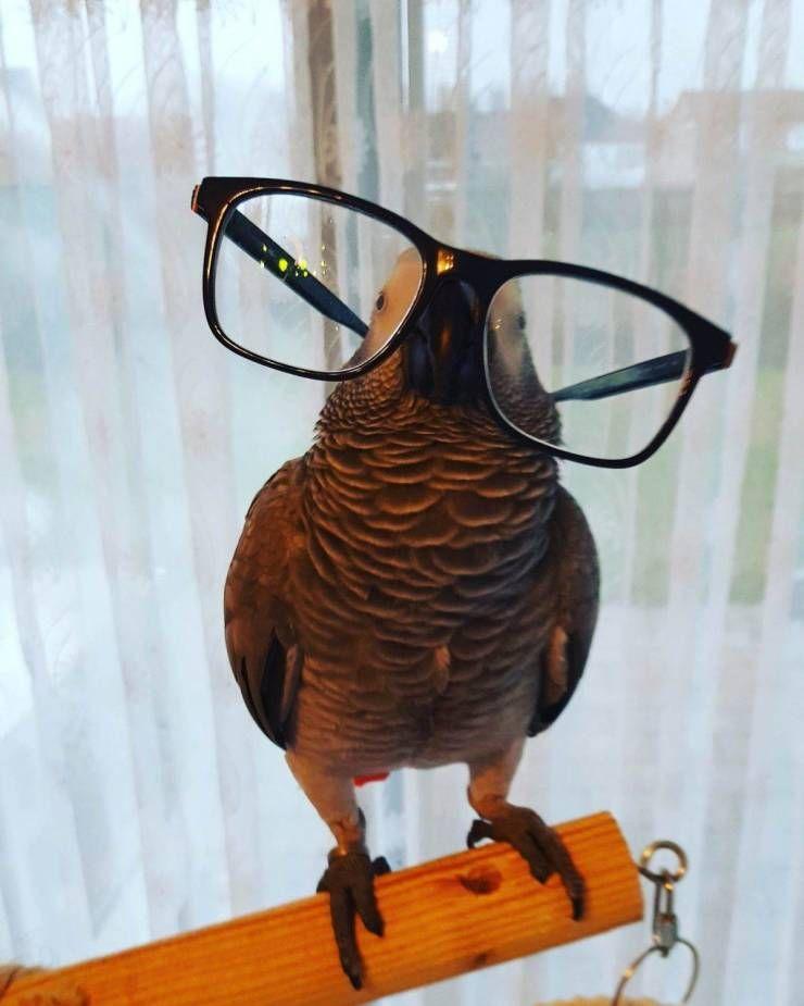 SpassPrediger.com - Picdump #120 - Lustige Bilder und coole Funpics - lustige Picdumps vom Spassprediger