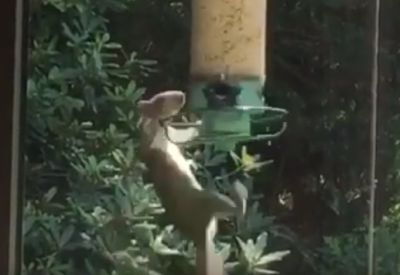 Eichhörnchen vs. Futterstation