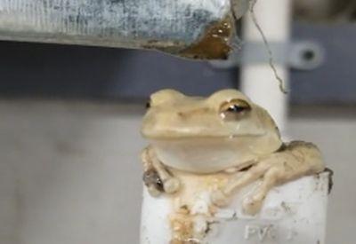Frosch chillt seine Basis