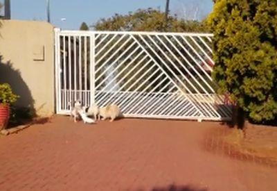 Komischer Hund bellt komisch