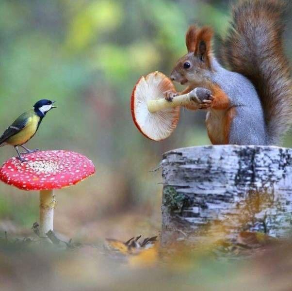 SpassPrediger.com - Picdump #132 - Lustige Bilder und coole Funpics - lustige Picdumps vom Spassprediger