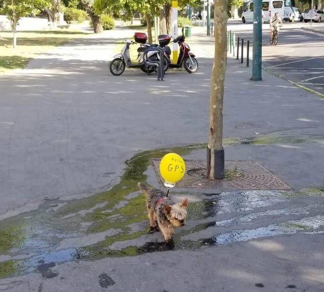 SpassPrediger.com - Picdump #134 - Lustige Bilder und coole Funpics - lustige Picdumps vom Spassprediger