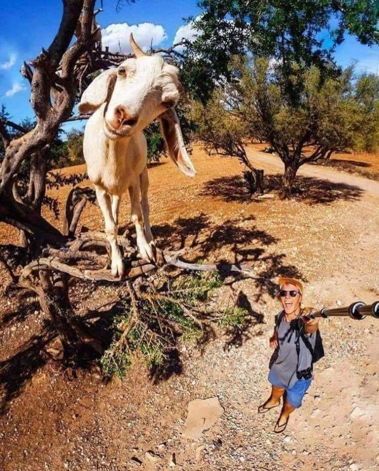 SpassPrediger.com - Picdump #135 - Lustige Bilder und coole Funpics - lustige Picdumps vom Spassprediger