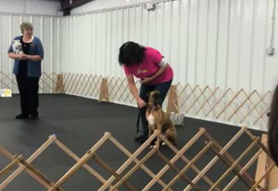 Genzenlose Freude beim Hund - einfach süß!