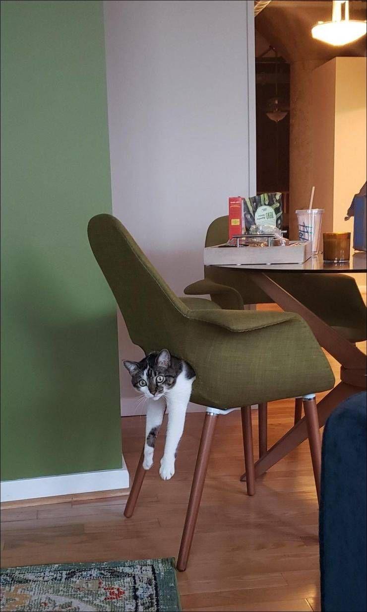 SpassPrediger.com - Picdump #141 - Lustige Bilder und coole Funpics - lustige Picdumps vom Spassprediger