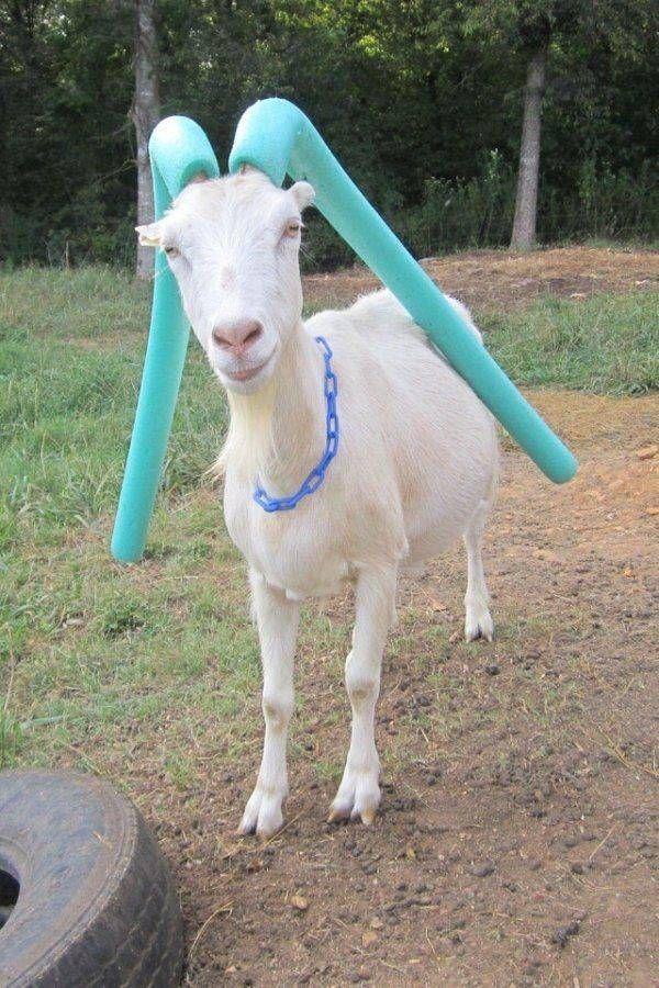 SpassPrediger.com - Picdump #145 - Lustige Bilder und coole Funpics - lustige Picdumps vom Spassprediger