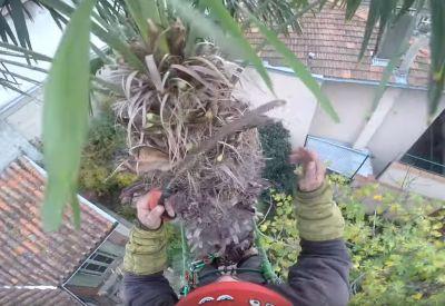 Das schwere Leben eines Baumpflegers