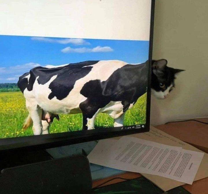 SpassPrediger.com - Picdump #150 - Lustige Bilder und coole Funpics - lustige Picdumps vom Spassprediger