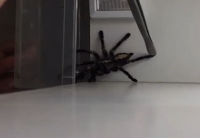 Na, Angst vor Spinnen?