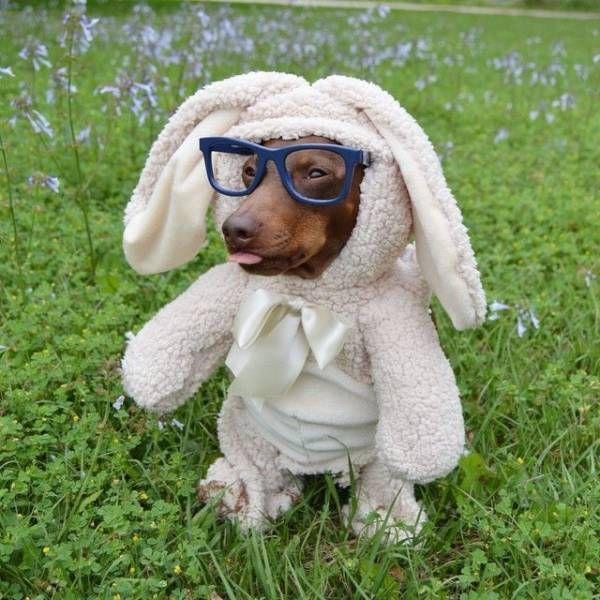 SpassPrediger.com - Picdump #171 - Lustige Bilder und coole Funpics - lustige Picdumps vom Spassprediger
