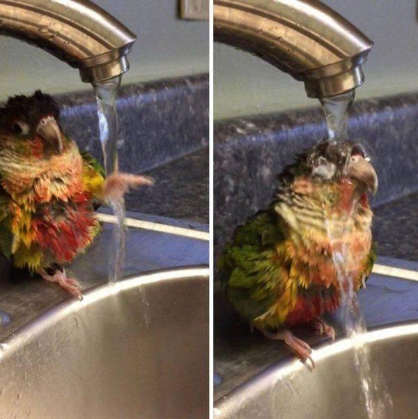 SpassPrediger.com - Picdump #184 - Lustige Bilder und coole Funpics - lustige Picdumps vom Spassprediger