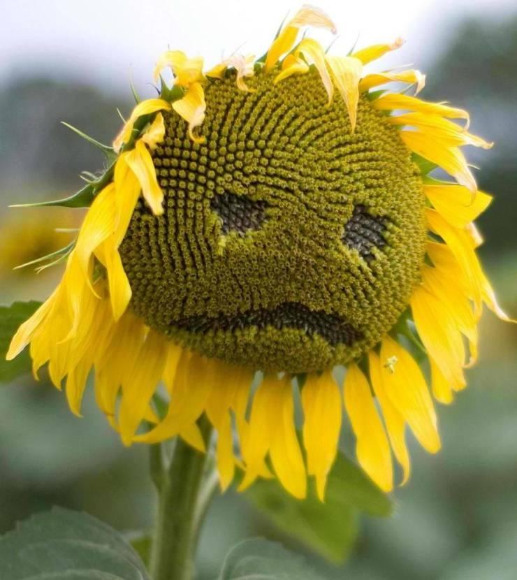 SpassPrediger.com - Picdump #191 - Lustige Bilder und coole Funpics - lustige Picdumps vom Spassprediger