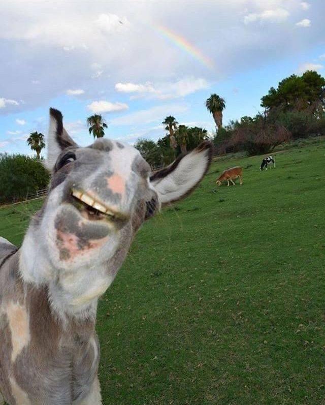 SpassPrediger.com - Picdump #194 - Lustige Bilder und coole Funpics - lustige Picdumps vom Spassprediger