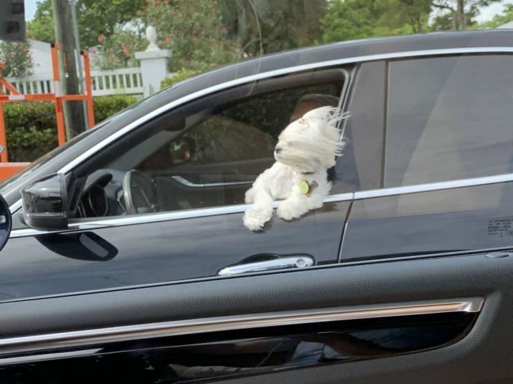 SpassPrediger.com - Picdump #214 - Lustige Bilder und coole Funpics - lustige Picdumps vom Spassprediger