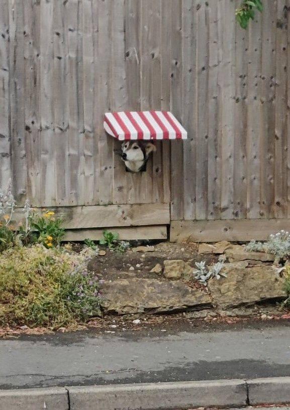 SpassPrediger.com - Picdump #215 - Lustige Bilder und coole Funpics - lustige Picdumps vom Spassprediger