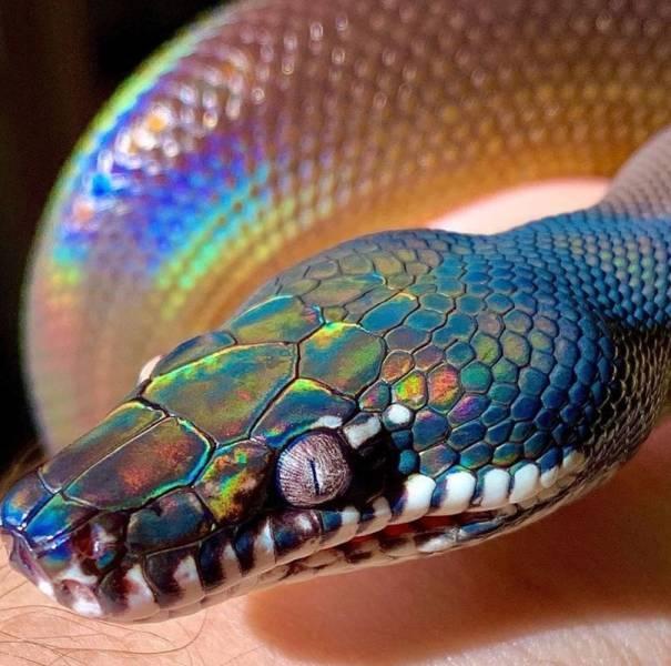 SpassPrediger.com - Picdump #221 - Lustige Bilder und coole Funpics - lustige Picdumps vom Spassprediger