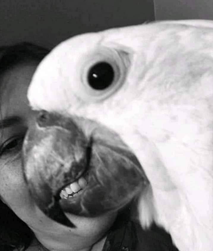 SpassPrediger.com - Picdump #226 - Lustige Bilder und coole Funpics - lustige Picdumps vom Spassprediger