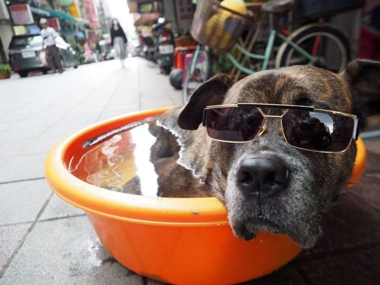 SpassPrediger.com - Picdump #232 - Lustige Bilder und coole Funpics - lustige Picdumps vom Spassprediger