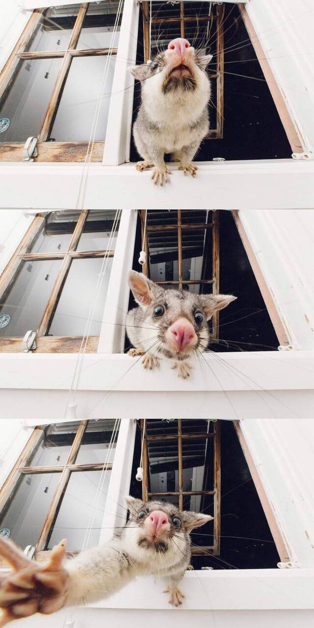 SpassPrediger.com - Picdump #237 - Lustige Bilder und coole Funpics - lustige Picdumps vom Spassprediger