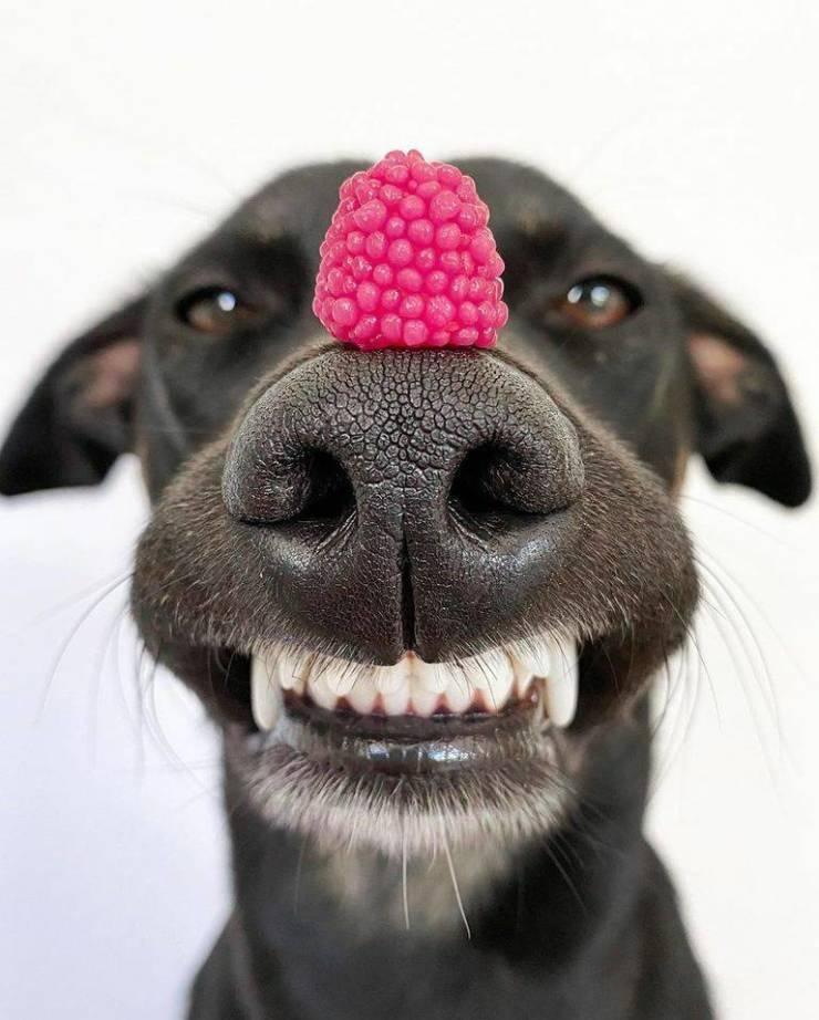 SpassPrediger.com - Picdump #240 - Lustige Bilder und coole Funpics - lustige Picdumps vom Spassprediger