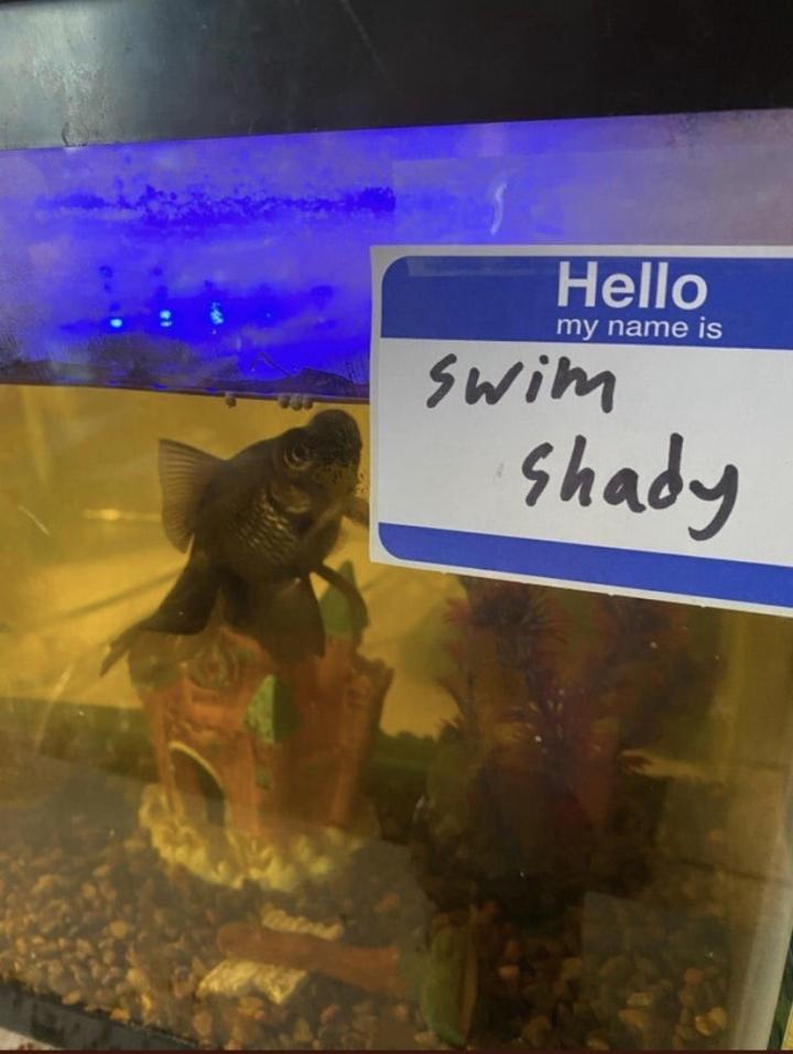 SpassPrediger.com - Picdump #246 - Lustige Bilder und coole Funpics - lustige Picdumps vom Spassprediger