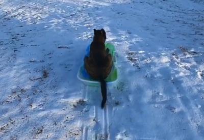 Winterfreuden mit Hund