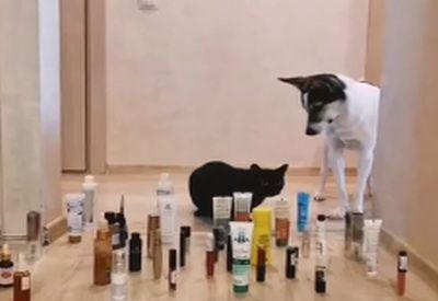 Katze oder Hund, wer ist begabter?