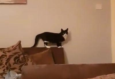 Freundliche Katze ist freundlich