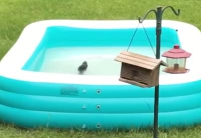 Kurz mal ein Eichhörnchen aus dem Pool retten