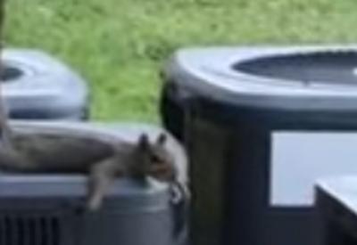 Was macht ein Eichhörnchen im Sommer?