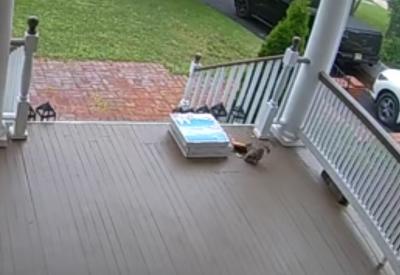 Eichhörnchen zockt Pizza